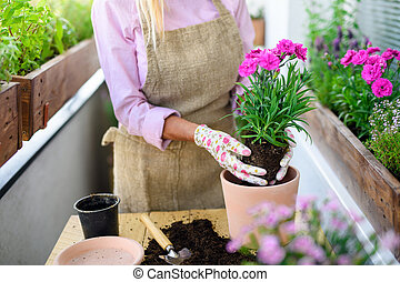 senior, unrecognizable, balkong, trädgårdsarbete, flowers., kvinna, plantande, sommar