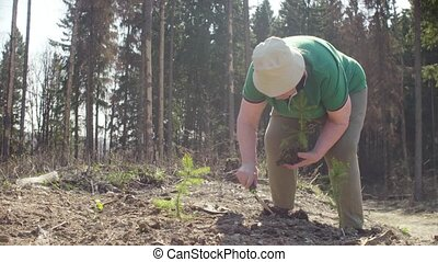 Senior volunteer plants a small fir-tree on the forest...