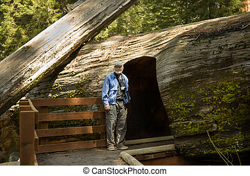 senior with a camera entering into the giant sequoia tunnel...