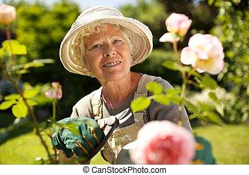 senior woman, arbete, i trädgården