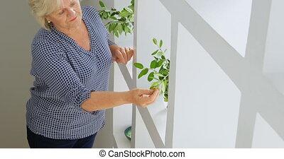 Senior woman checking plant 4k - Senior woman checking plant...