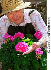 Senior woman gardening - Senior woman with a pot of geranuim...