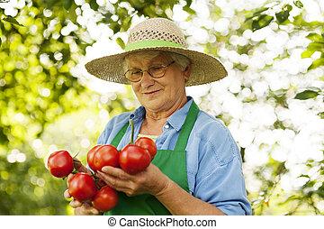 senior woman, holdingen, tomaten