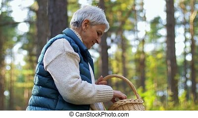 senior woman picking mushrooms in autumn forest - picking ...