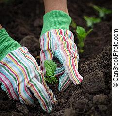 Senior woman planting a seedling