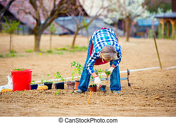 Senior woman planting seedlings into the ground in garden