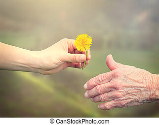 Senior woman sharing a flower with young woman