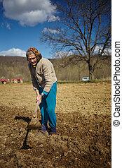 Senior woman sowing potatoes