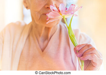 Senior woman - Unrecognizable senior woman holding a pink...