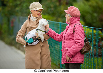 Senior woman walking her little dog on a city street