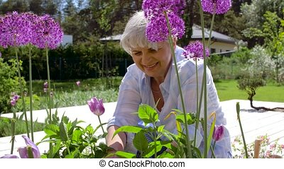 senior woman with garden pruner and flowers - gardening and...