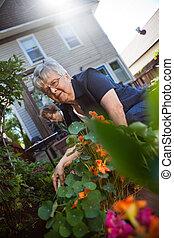 Senior women gardening