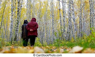 senior women in jackets walk among gold birches back view -...