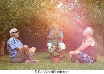 seniores, planta maconha, relaxante, ao ar livre
