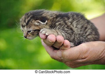 Senior's hands holding little kitten
