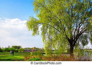 Seniors in the green park