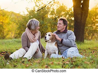 Seniors with dog - Senior couple walking their beagle dog in...