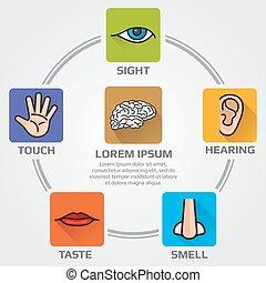 sensório, ícones, nariz, ouvindo, human, gosto, vista, orelha, vetorial, infographics, mão, cinco, olho, cheiro, boca, sentidos