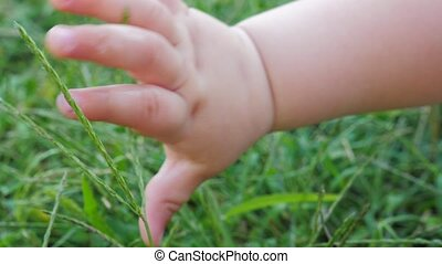Baby's hand feels the grass. Fingers of toddler touching everything around.
