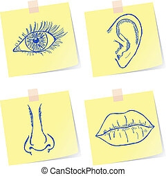 Senses sketches - Illustration of eye, ear, nose and mouth...