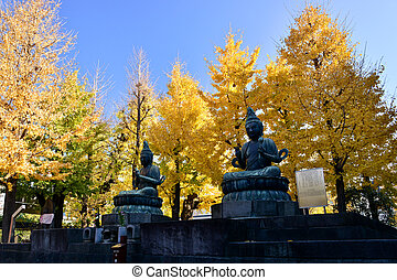 sensoji, ginkgo boom, tempel
