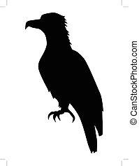 sentado, águila, vista lateral