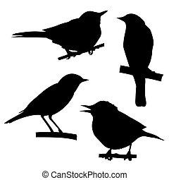 sentado, árbol, siluetas, vector, rama, aves