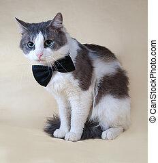 sentado, amarillo, arco, puntos, corbata, gato blanco