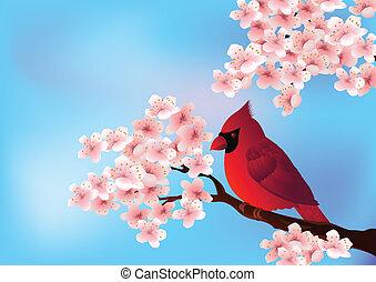 sentado, cerezo, blo, pájaro, rojo