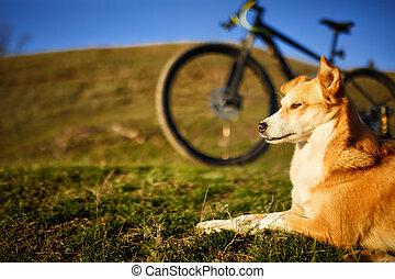 sentando, cachorro vermelho, e, montanha, bicicleta, com, greenfield, fundo