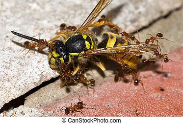 sentenciado, vespa