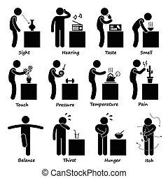 sentidos, human, ícones