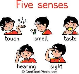 sentidos, jogo, cinco, ícone