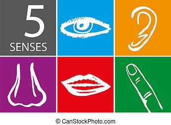 sentidos, jogo, -, ilustração, vetorial, cinco, ícone