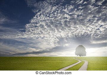 sentier, arbre