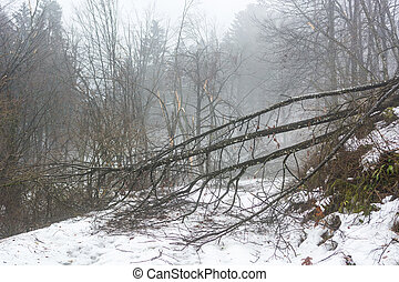 sentier, arbres neigeux, cassé