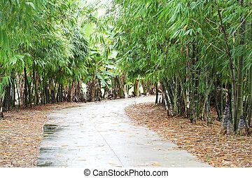 sentier, bambou