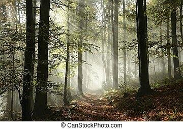 sentier, brouillard, forêt