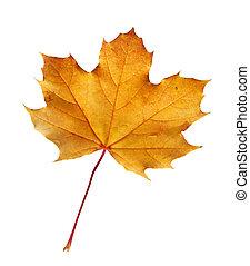 sentier, coupure, feuille, automne