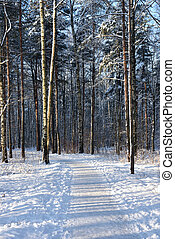 sentier, dans, hiver, forêt