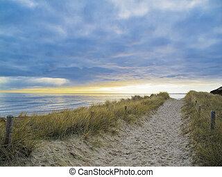 sentier, dans, les, dunes