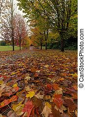 sentier, feuilles marche, érable, automne