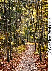 sentier, forêt, automne