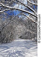 sentier, forêt, hiver