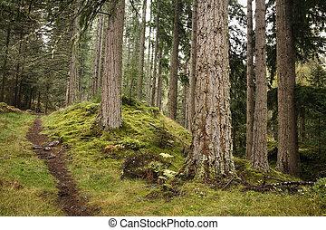 sentier, forêt