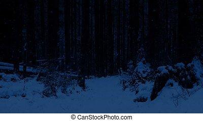 sentier, nuit, par, forêt, neigeux