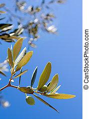 sentier, olives, -, coupure, branche