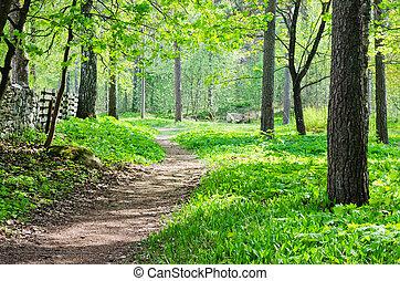 sentier, parc, été