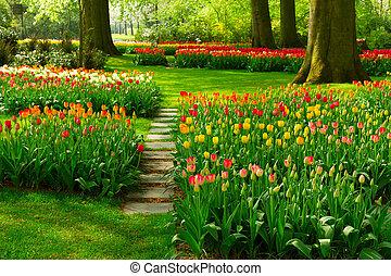 sentier, pierre, enroulement, jardin