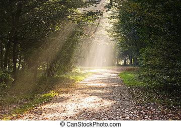 sentier, rayons, lumière soleil